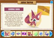 Jamaa Journal - Coming Soon Fennec Fox