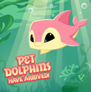 Pet Dolphins Have Arrived