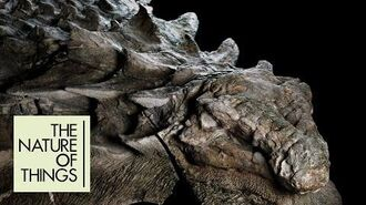 Perfectly preserved dinosaur fossil looks like it was alive yesterday The Nature of Things