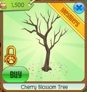 Cherry blossom tree clicked
