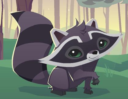 Raccoon | Animal Jam Wiki | FANDOM powered by Wikia