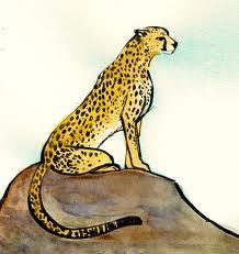 AJ cheetah 3