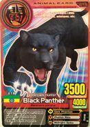 Kartu Animal Kaiser Black Panther 3500 evo 2