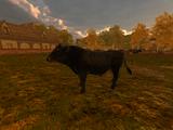 Andalusian Black Bull