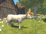 Lourdais Cattle