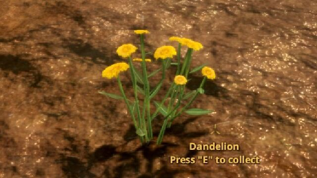 File:Dandelion.jpg