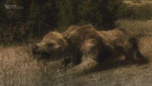 Giant Bear-dog