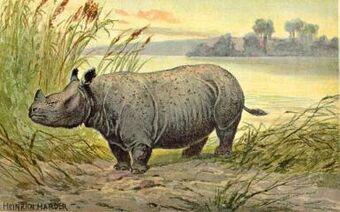 Teleoceras | Animal of the world Wiki | Fandom