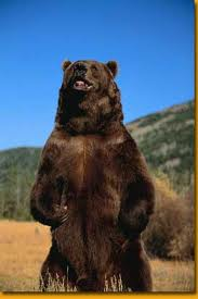 File:Grizzly Bear.jpg