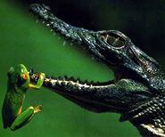 Reptil (1)