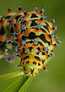 Insectos (5)