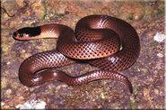 Reptil (3)