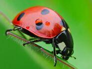 Insectos (2)