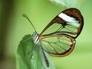 Insectos (6)