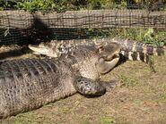 Reptil (2)