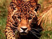 450px-Leopardo2