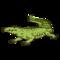 Wading Gator