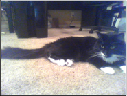 Milo resting