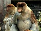 Tobuscus Monkey