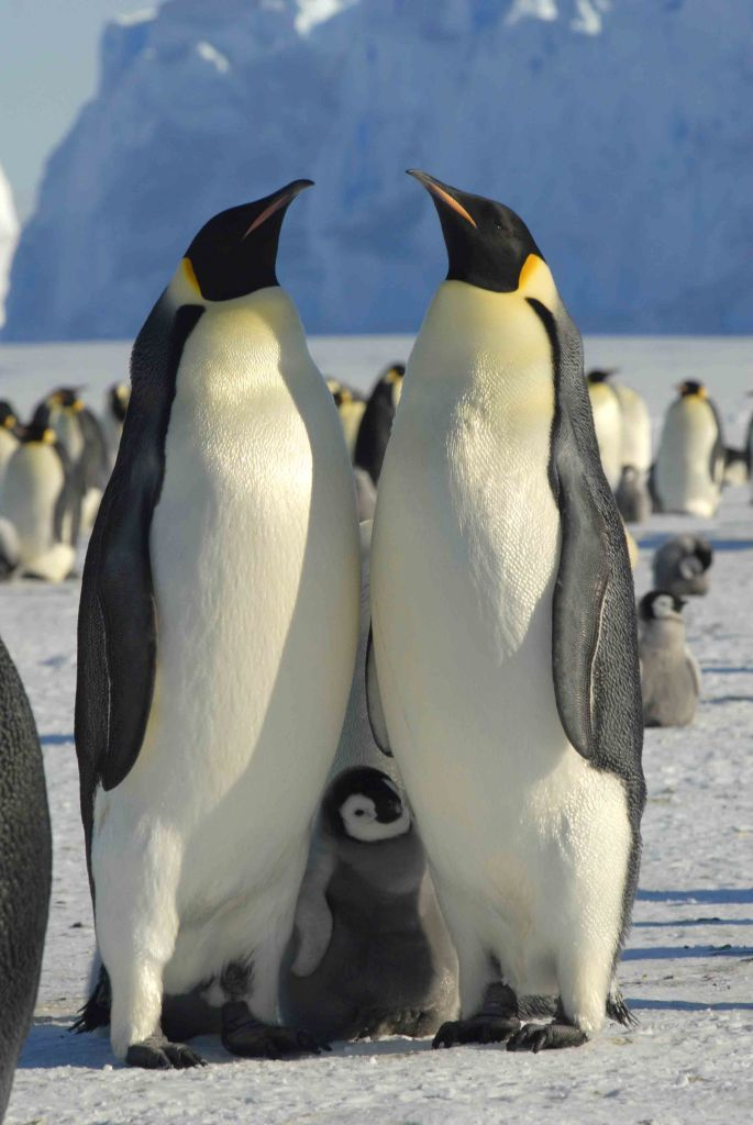 penguin - photo #27