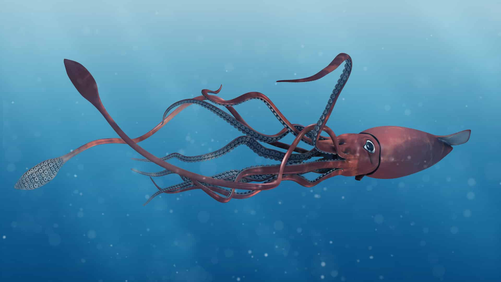 Pictures of giant squid