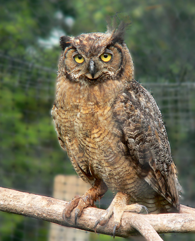 Owl Animal Planet S The Most Extreme Wiki Fandom
