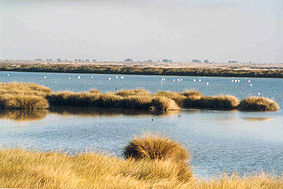 283px-Wetlands in Donana-1-