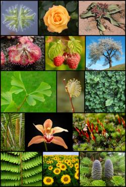 File:250px-Diversity of plants image version 5-1-.png