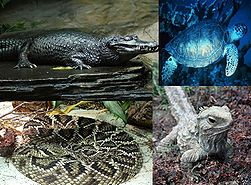 File:251px-Reptiles-1-.jpg