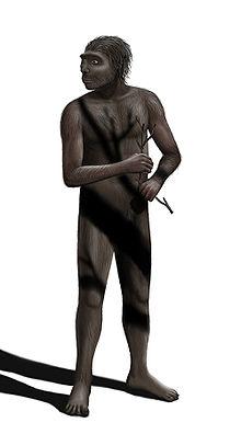 220px-Homo erectus Steveoc 86-1-