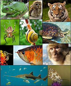 250px-Animal diversity October 2007-1-