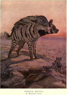 220px-Winifred austen hyena-1-