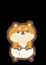 Shiba Puppy