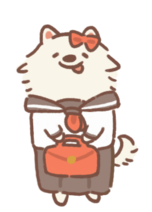 Student Samoyed