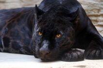 Black-panther-3466399 1920