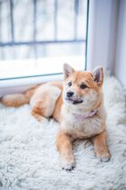 Adorable-animal-breed-1805164