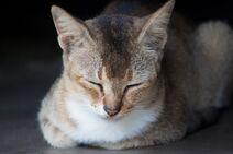 Adorable-animal-blur-599649
