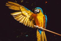 Animal-animal-photography-avian-2317904