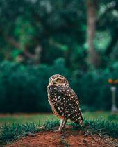 Animal-animal-photography-avian-2115984