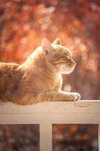 Adorable-animal-cat-804475