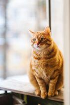 Adorable-animal-animal-photography-1170986