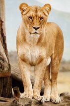 Africa-african-animal-41314