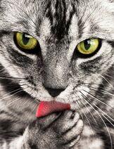 Animal-cat-close-up-69932