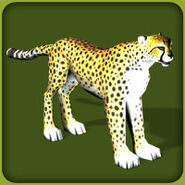 Cheetah (Blue Fang)