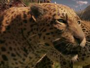 Narnia Leopard
