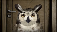 HBO Animals Great Horned Owl