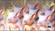 MAD Pigs