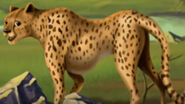 Jumpstart Cheetah