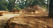 Life.of.Pi Warthogs