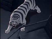 TRAoJQ White Tiger